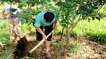 bổ sung dinh dưỡng cho cây sau thu hoạch nhanong24h